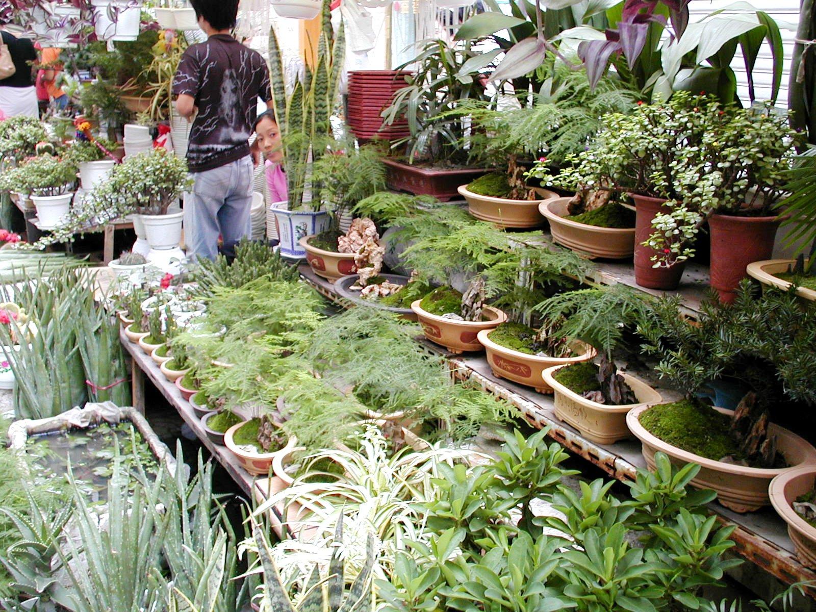 蘇州の花市場