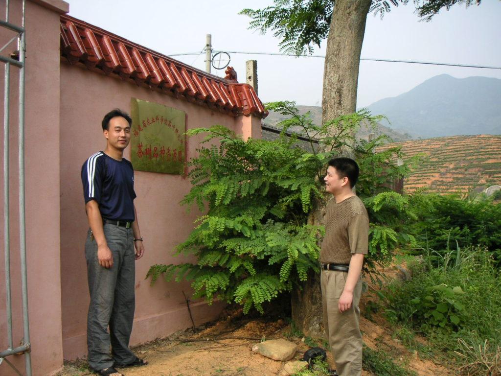 茶樹の品種資源圃