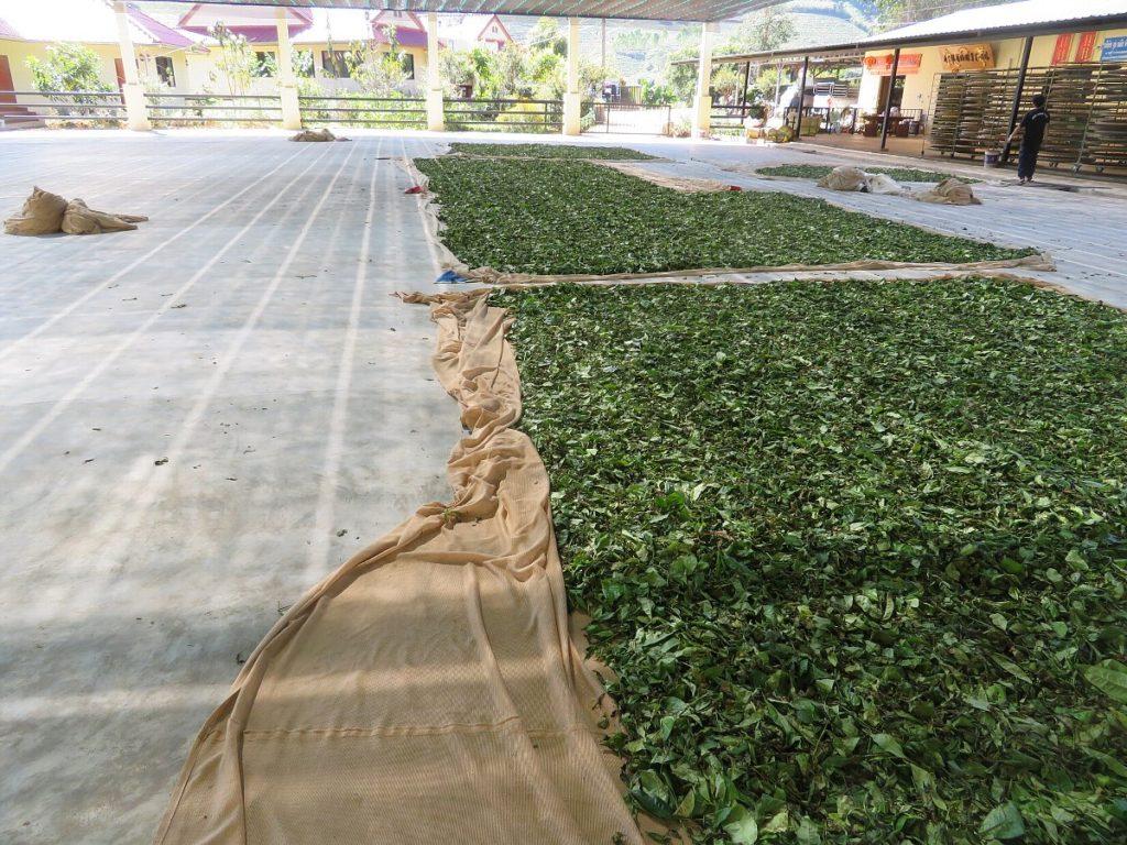 茶葉の萎凋